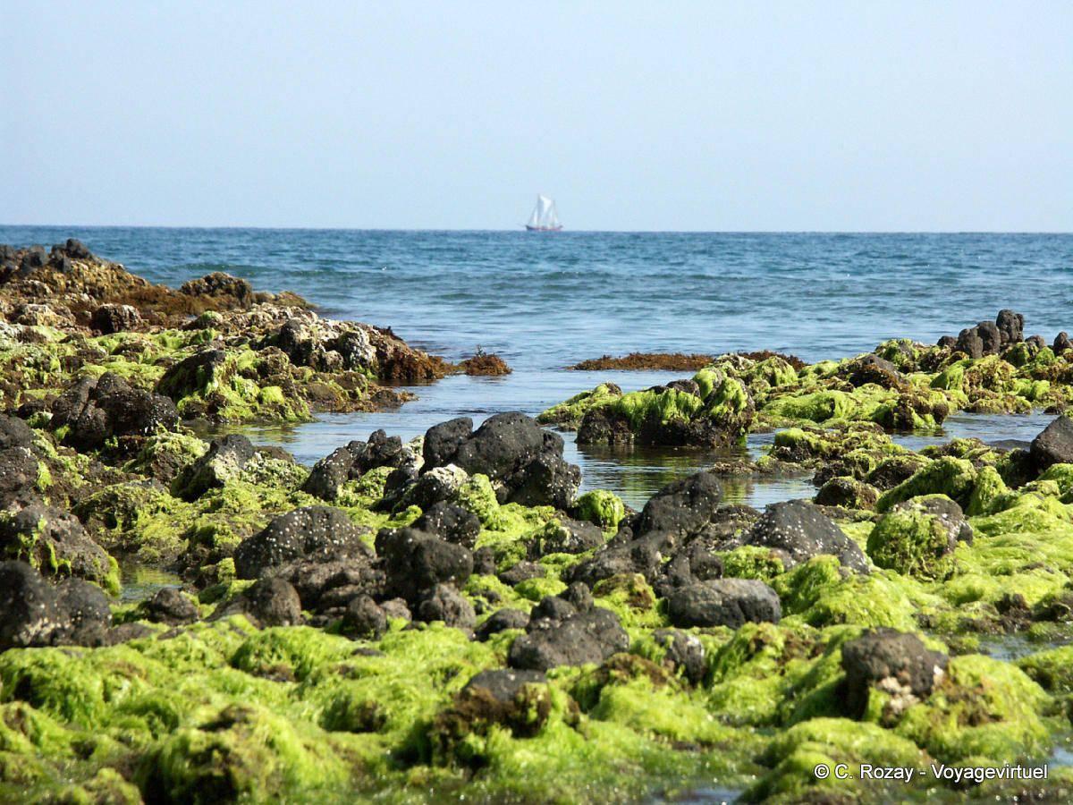 Algae and boat off playa monsul cabo de gata spain for Cabo de gata spain