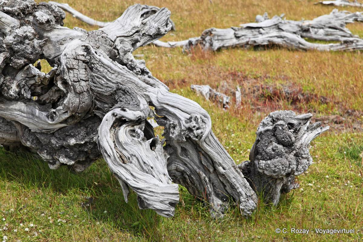 Natural Wood Sculpture Float Lago Roca Argentina