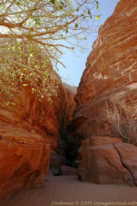 Wadi Rum 496