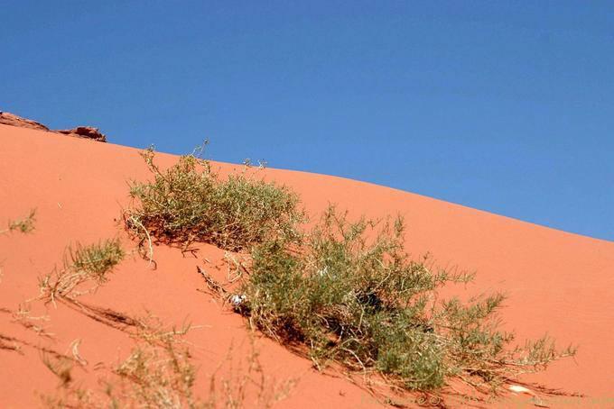 Wadi Rum 535