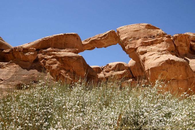 Wadi Rum 553
