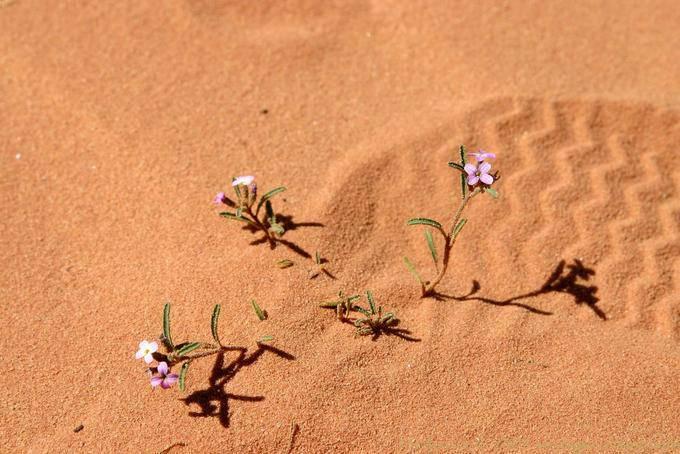 Wadi Rum 622