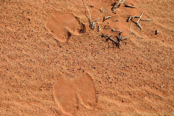 Wadi Rum 721