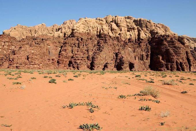Wadi Rum 734