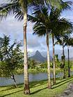 Palm trees on mountain background landscape to Flic en Flac, Mauritius.