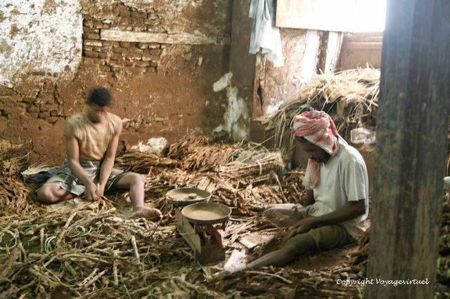Tihama Al Hodeidah 3363